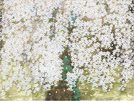 上山市の権現桜